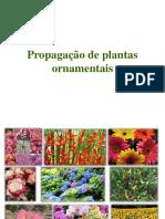 02_Propagação de Plantas Ornamentais