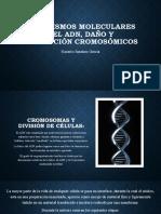 Mecanismos Moleculares Del ADN, Daño y Reparación Cromosómicos