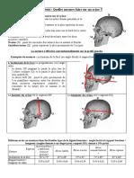 Craniometrie (2)