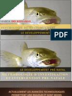 COURS 3 - Desenvolvimento Pré-natal