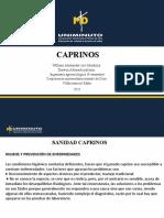 caprinos (ciro y darwin)