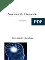 sinapsis 3