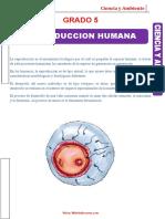 950-1619396955-Reproducción-Humana