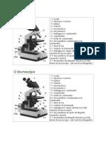 Aula 03 Pratica Microscopio