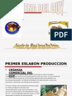 Cadena_de_produccion_de_cuy
