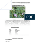 Pueraria_phaseoloides