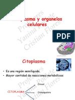 Citoplasma y Organelos Reforzamiento 2