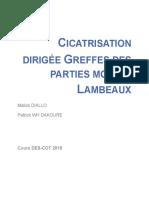 Cicatrisation, Greffes, Lambeaux
