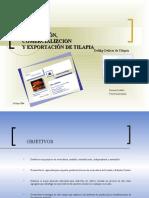 Delikp Delicia de Tilapia
