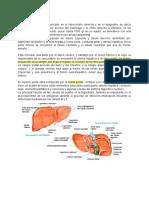 Patología hígado