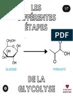 Les etapes de la glycolyse