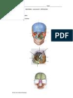 exercicios_2_osteologia