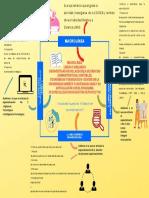 Mapa mental-Jina Marcela Lozano Bedoya (6)