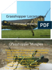 Grasshopper Locomotion