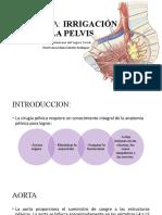 Anatomia irrigacion pelvis