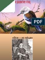размножение развитие птиц