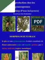 Cours 9- La reproduction chez les gymnospermes