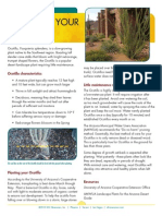 Care for Your Ocotillo