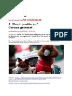 BILD meldet 1. Hund positiv
