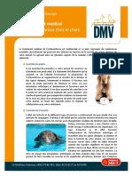 Traitement-medical-de-losteoarthrose-chez-le-chien1