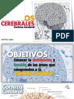lobuloscerebralesjrl-120714092259-phpapp02