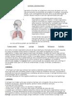 SISTEMA  RESPIRATÓRIO e circulatorio