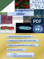 3-Niveles_de_Organizacion_-_Celula
