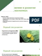 Размножение и развитие насекомых МСО-задание 6