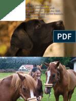 Dr. Uwe Petermann, DAA Kontrollierte Laserakupunktur Bei Pferd Und Hund