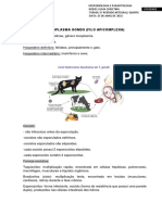 Ciclo Biológico Toxoplasma Gondii