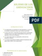 METABOLISMO DE LOS AMINOÁCIDOS1