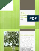 Виды древесных растений