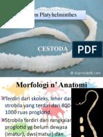 presentase ZoIn_CESTODA