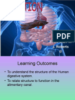digestive_system_powerpoint