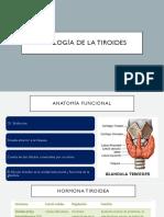 Fisiología de la tiroides