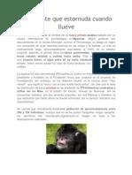 un primate destornuda