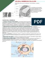 3. Struttura Della Membrana Cellulare(1)