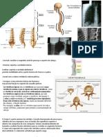 aula coluna vertebral