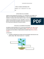 GUÍA DE ACTIVIDADES N° 2  LAS PLANTAS SUS ESTRUCTURAS Y FUNCIONES y autoevaluación