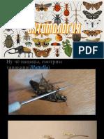 Entomologia_blya