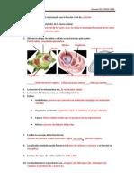 examen-ud1-2º-ESOcorregido3