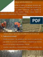 Sistemas de exploração florestal