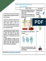 1°spe-fiche-bilan-immuno-C1