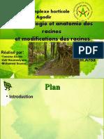11 Anatomie Et Physiologie Végétale Partie 2
