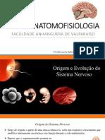 Encontro 3 - Origem e Evolução Do Sistema Nervoso