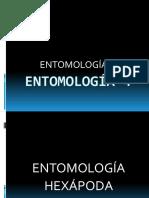 ENTOMOLOGÍA 4