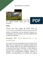 Cómo Diferenciar a un caballo