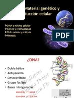 Clase 3.-ADN a Cromosomas