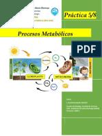 Copia de BIO-018 Practica 5 y 8 - Procesos Metabólicos