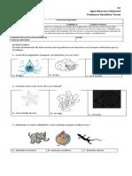P. diagnostica - Cs. Naturales 1º básico